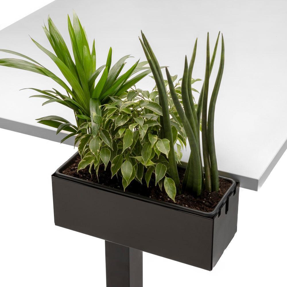 Multibox S mit Pflanzen